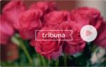 Логотип Компания Трибуна